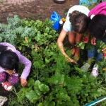 Planting Spring Greens